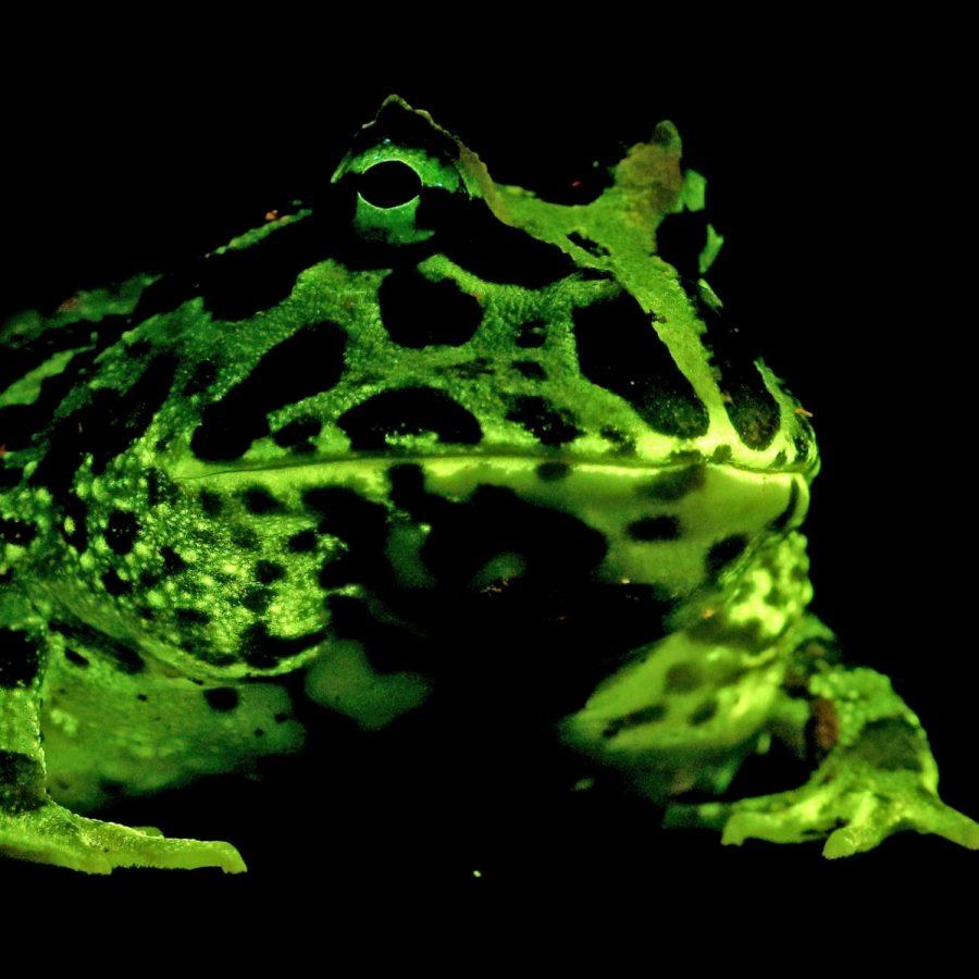 amphibians+glowinggg